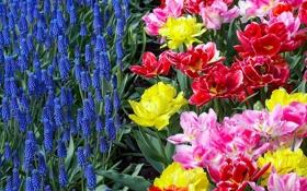 Обои цветы, клумба, яркие