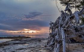 Обои море, закат, корни, камни, дерево, рассвет, сухое