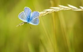 Обои зелень, лето, желтый, природа, фон, обои, бабочка