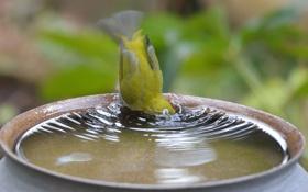 Картинка вода, птица, купание