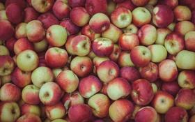 Картинка яблоки, урожай, изобилие