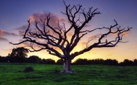 Обои небо, трава, закат, природа, дерево, сухое