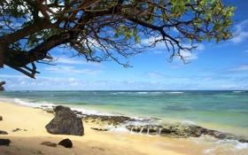 Обои песок, камни, горизонт, облака, волны, море, дерево