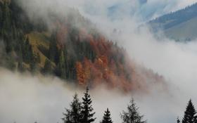 Обои осень, дымка, ели, деревья, туман, природа, елки