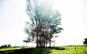 Обои природа, свет, дерево