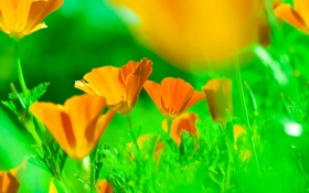 Обои луг, трава, лепестки, цветы