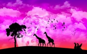 Обои природа, жираф, африка