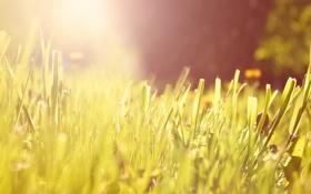 Обои солнце, свет, Трава, утро