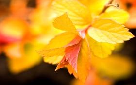 Картинка листья, макро, фон, ветвь, ярко-жёлтые