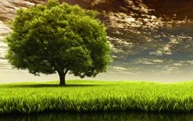 Обои травка, поле, природа, дерево