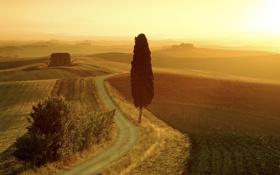 Обои дорога, поле, лето, пустота, пейзаж, закат, оранжевый