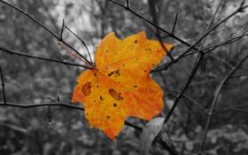 Картинка осень, капли, деревья, ветки, дождь, листок, клен