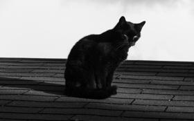 Обои крыша, кот, кошак, котяра, котэ