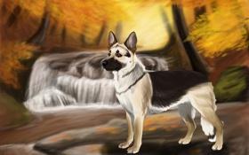 Картинка камни, осень, деревья, река, вода, собака