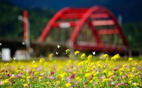 Обои город, цветы, лето