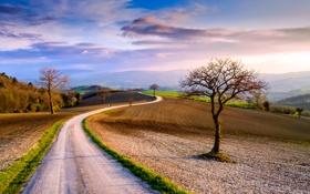 Обои весна, небо, облака, март, деревья, дорога, Италия