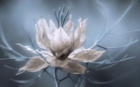 Обои цветок, макро, лепестки, растение