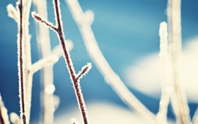 Обои зима, ветки, колорадо