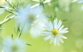 Обои цветок, растение, лепестки, луг