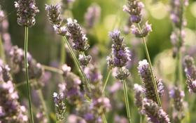 Картинка лето, макро, свет, цветы, природа, блики, растения