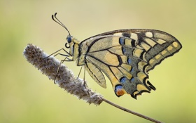 Картинка цветок, бабочка, растение, крылья, насекомое, мотылек