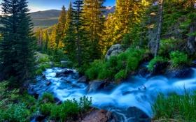 Картинка лес, природа, река, камни, поток