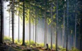 Обои лес, природа, стволы