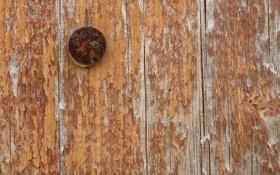 Обои wood, worn, chipped