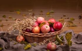Обои листья, осень, корзина, фрукты, колосья, яблоки
