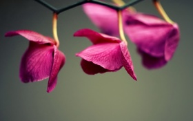 Обои красиво, цветок, праздник