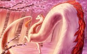 Картинка дракон, сакура, хвост, унесенные призраками, haku