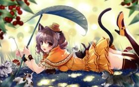 Картинка лес, кот, лист, грибы, чулки, шляпа, девочка
