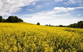 Картинка поле, небо, трава, облака, деревья, пейзаж, цветы