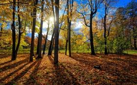 Обои осень, лес, листья, солнце, деревья, стволы