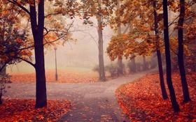 Обои осень, деревья, туман, парк, фонарь, аллея
