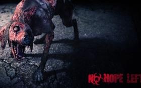 Обои zombie, dog, Resident Evil 6, Biohazard 6, C-virus
