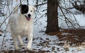 Картинка друг, лес, собака