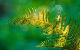 Обои природа, лист, растение