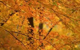 Обои осень, деревья, фон, листва, оранжевая