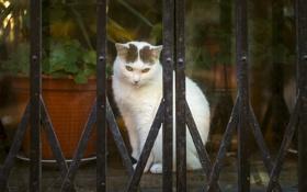 Картинка кот, фон, глаза, кошка