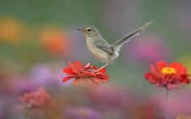 Обои птица, цветок, хвост, природа