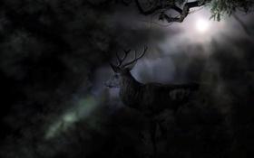Обои ночь, природа, олень