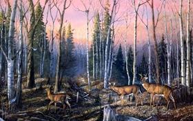 Обои осень, Terry Doughty, ноябрь, береза, гнездо, осенний лес, олени