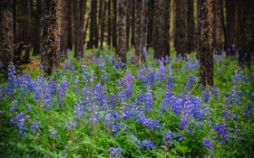 Картинка лес, цветы, природа