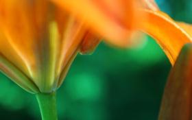 Обои макро, цветы, природа, растения, лепестки, стебель