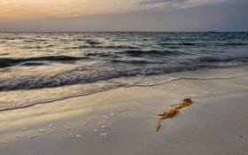 Картинка песок, море, волны, пена, водоросли, тучи, мусор