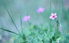 Обои трава, зелень, цвет, размытость, розовый, цветок, природа