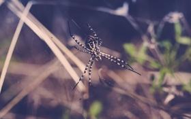 Картинка лапки, паутина, паук