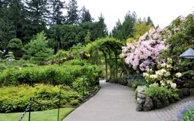 Картинка деревья, цветы, сад, Канада, дорожка, кусты, Butchart Gardens