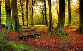Обои листья, леса, природы, скамья, деревья, Осенью